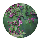 Enchanting Garden - Sphere