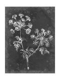 Slate Floral I