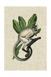 Canopy Monkey IV Reproduction d'art par Naomi McCavitt