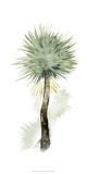 Palm in Watercolor II