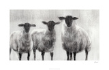 Rustic Sheep I