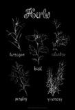 Herb Varieties Reproduction d'art par Ethan Harper