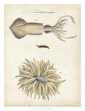 Ocean Curiosities I