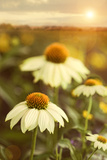 Summer Flowers in Field