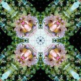A Floral Mandala Montage Papier Photo par Trigger Image