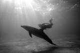 A Black and White Image of a Bottlenose Dolphin and Snorkeller Interacting Contre-Jour