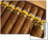 Close-Up of Limited Edition Cigars in a Box  Cohiba  Havana  Cuba  West Indies  Central America