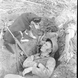 US Marine in a Foxhole with War Scouting Husky Dog During the Landing of Guam  August 1944