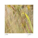 Grass 38