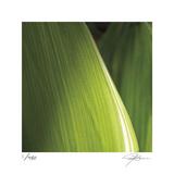 Palm Blades