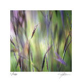 Grass Abstract 4