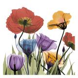 Flowerscape Reproduction d'art par Albert Koetsier
