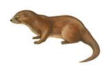 European Otter (Lutra Lutra)  Mammals