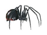 Black Widow (Latrodectus)  Spider  Arachnids
