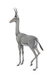 Dibatag (Ammodorcas Clarkei)  Mammals
