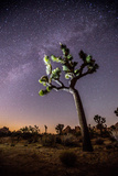 A Joshua Tree under the Milky Way