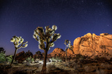 Joshua Trees Beneath the Stars