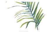 Palm Wonderful V