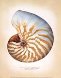 Chambered Nautilus Reproduction d'art par Richard Van Genderen