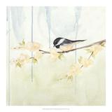 Spring Chickadees III