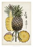 Pineapple Botanical Study II Giclée par Naomi McCavitt