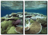 Great Barrier Reef Near Port Douglas, Queensland, Australia Tableau multi toiles par Flip Nicklin/Minden Pictures