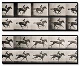 "Jockey on a Galloping Horse, Plate 627 from ""Animal Locomotion,"" 1887 Tableau multi toiles par Eadweard Muybridge"