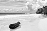 ¡Viva Mexico! B&W Collection - Tree Trunk on a Caribbean Beach II